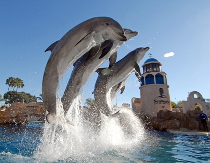 Dolphin Discovery at SeaWorld San Diego