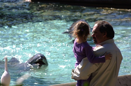 dolphin-pool-sea-world-no-border