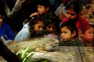 Children and iguana