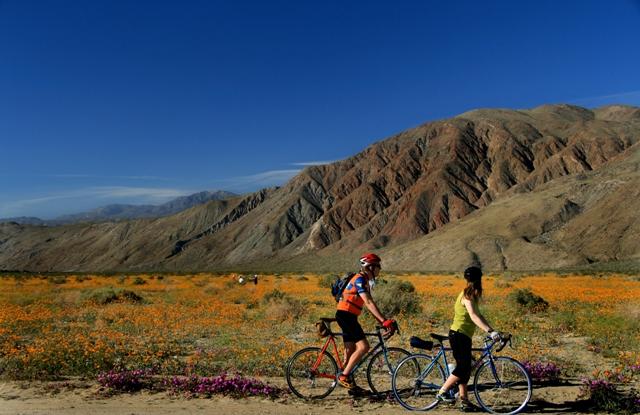 bicyclists anza borrego wildflowers san diego travel blog