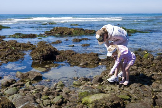 Tidepooling With The Birch Aquarium