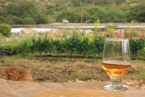 San Diego Beer Week 2011