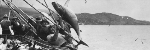 Tuna Fishing - San Diego History Center