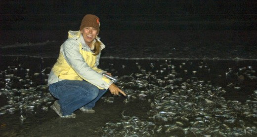 Grunion Run with the Birch Aquarium at Scripps