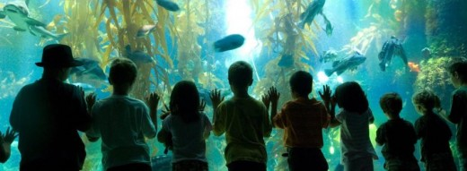 Kids Enjoying the Birch Aquarium at Scripps