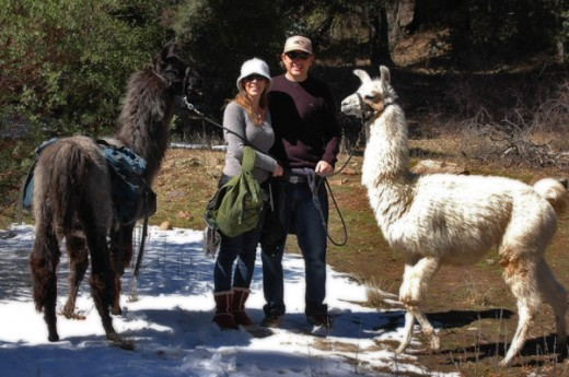 Couple with two Llamas from the Wikiup Bed and Breakfast