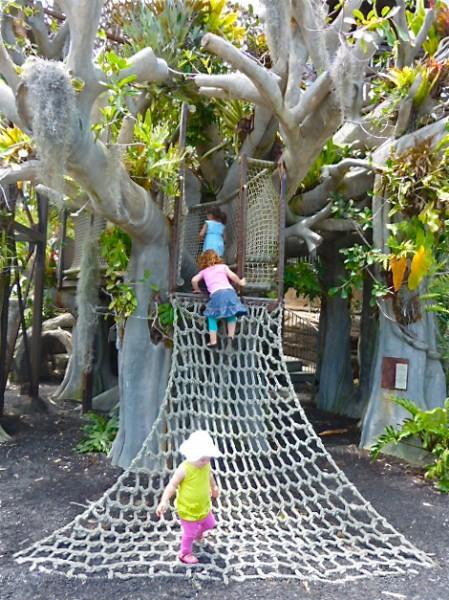 Kids Climbing a Tree at the San Diego Botanic Garden