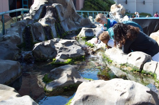 Family learning about tide pools at the Birch Aquarium at Scripps