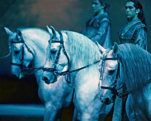 Horses - Cavalia