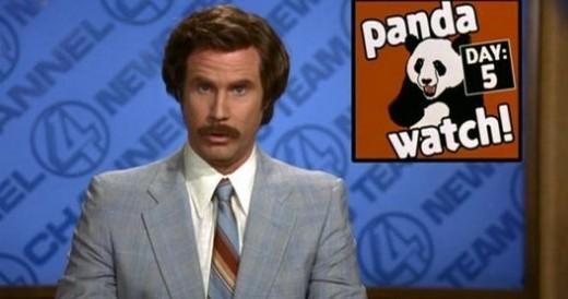 Anchorman - Panda Watch
