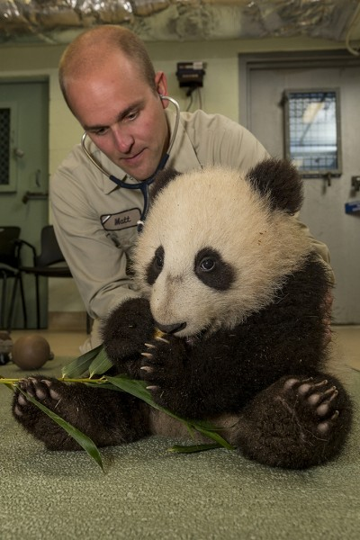 Spring's New Babies at San Diego Attractions