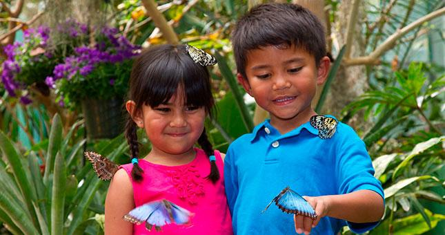 Butterfly Jungle at the San Diego Zoo Safari Park