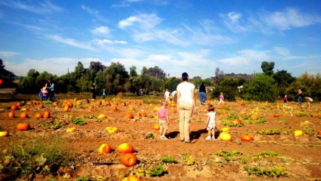 Farm Stand West's Pumpkin Patch