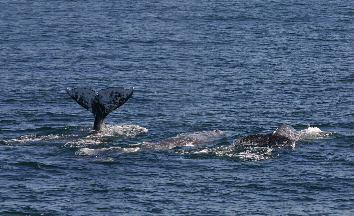 If you're lucky, you can spot a whale breaching the surface along the San Diego coastline.