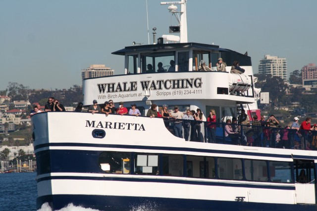 Take a ride with Flagship Harbor Excursions and sail the ocean blue in search of whales.