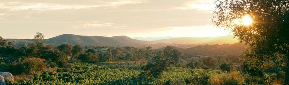 Scenic vineyards at Milagro Farm