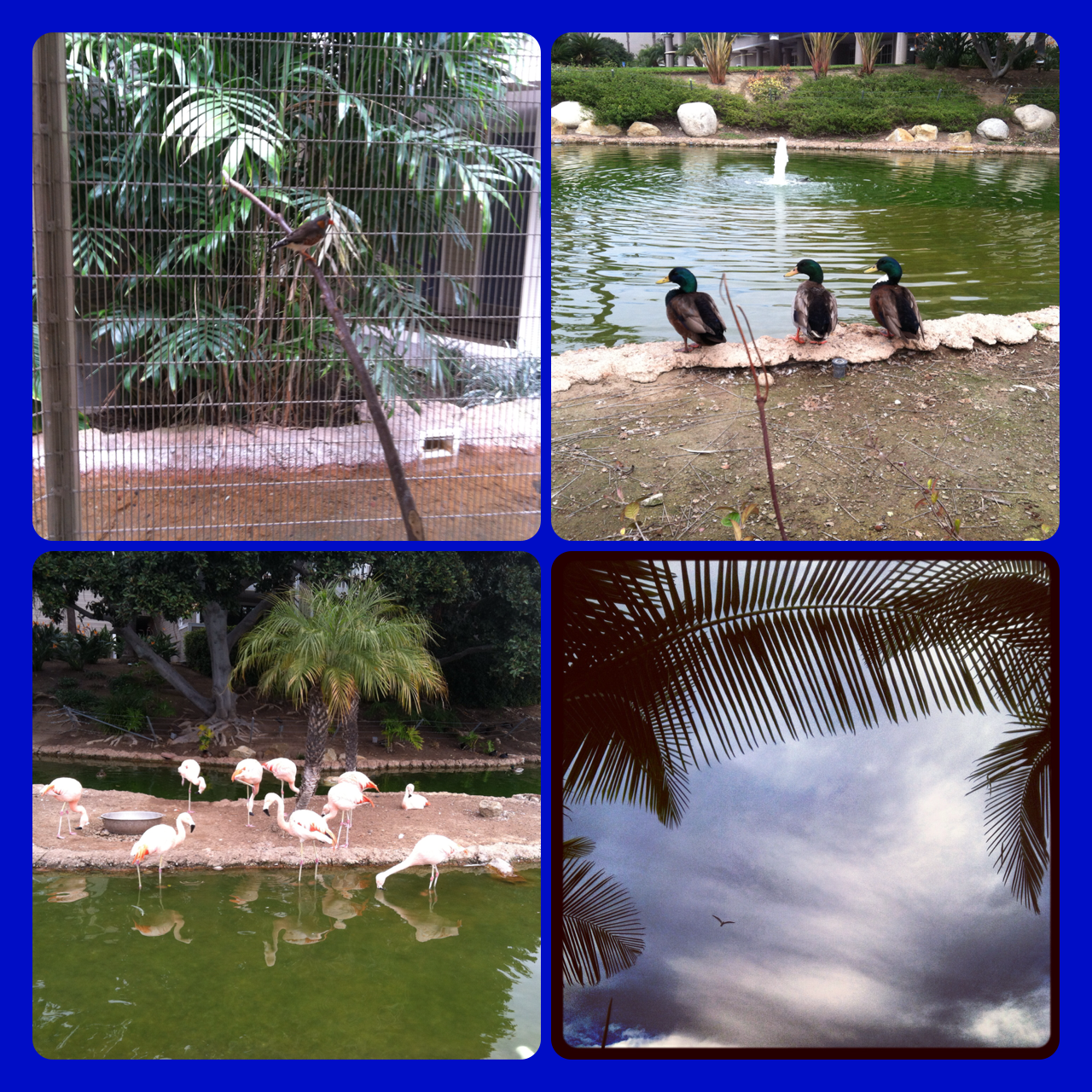 Flamingos, finches and ducks - oh my! - at the Coronado Island Marriott
