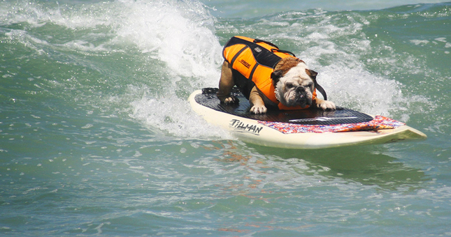 Unleashed by Petco Surf Dog Competition - Top Things to Do in San Diego