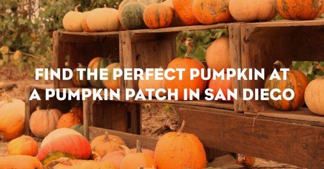 pumpkin-patch-1200x627