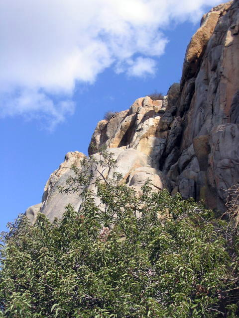 Climber's Loop Trail along Mission Gorge in Mission Trails Regional Park