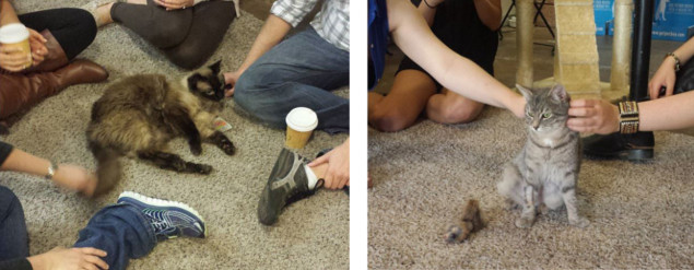 Cats and coffee are the purrrfect combo (photos via @thecatcafesandiego)