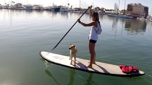 Pet Lovers Stand Up Paddleboard
