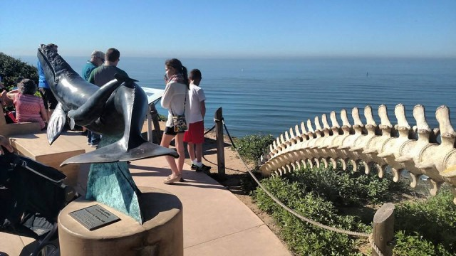 Whale Overlook - Cabrillo National Monument