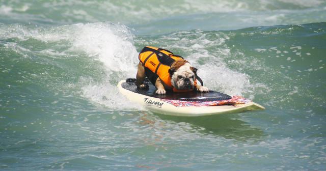 surf-dog-1200x630