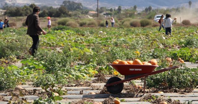 suzies-farm-bb-1200x630