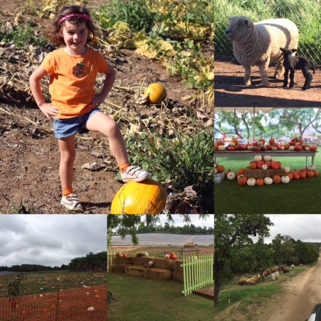 Stehly Farm's Pumpkin Patch