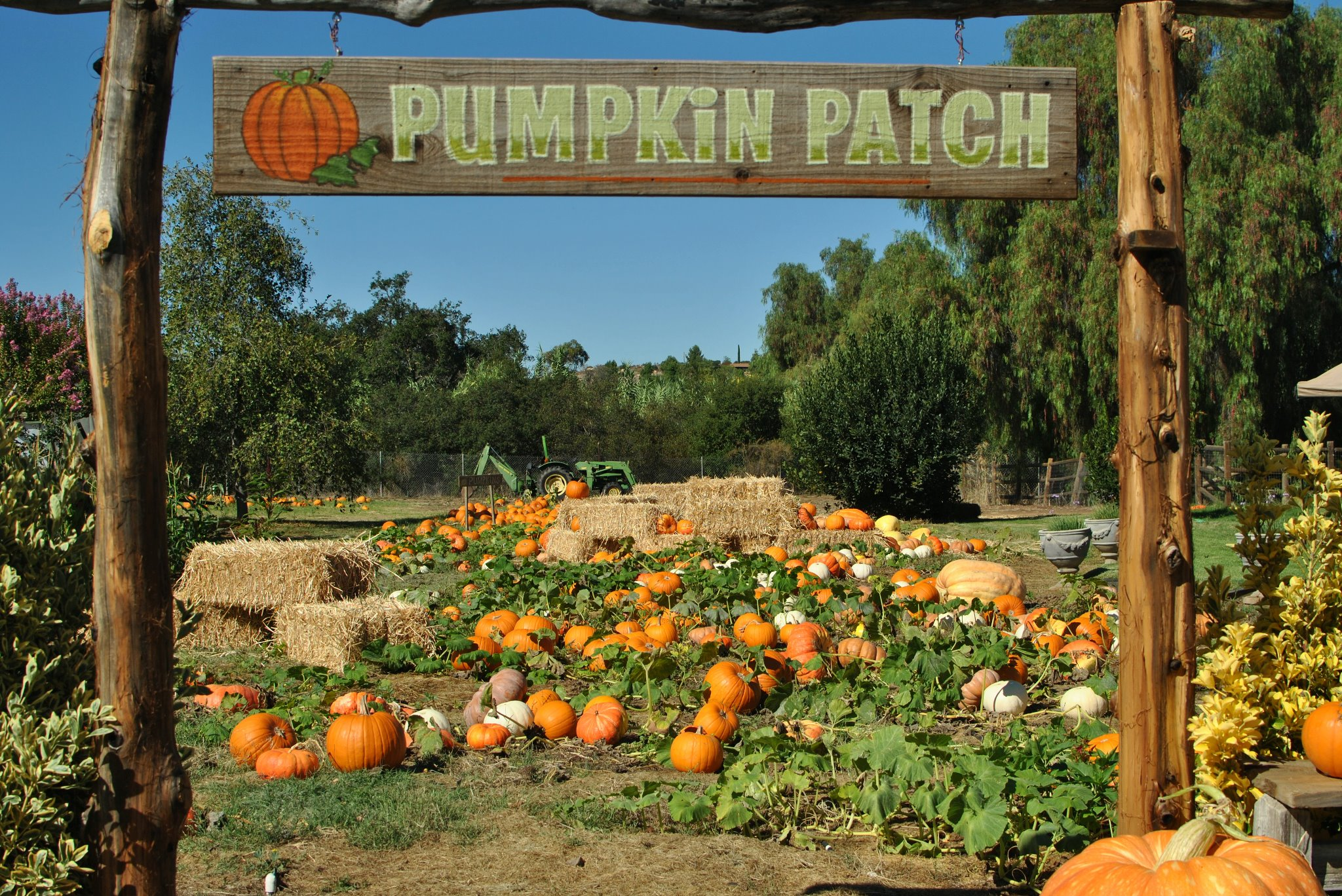 Pumpkin Patch sign and pumpkins at Summer Farms