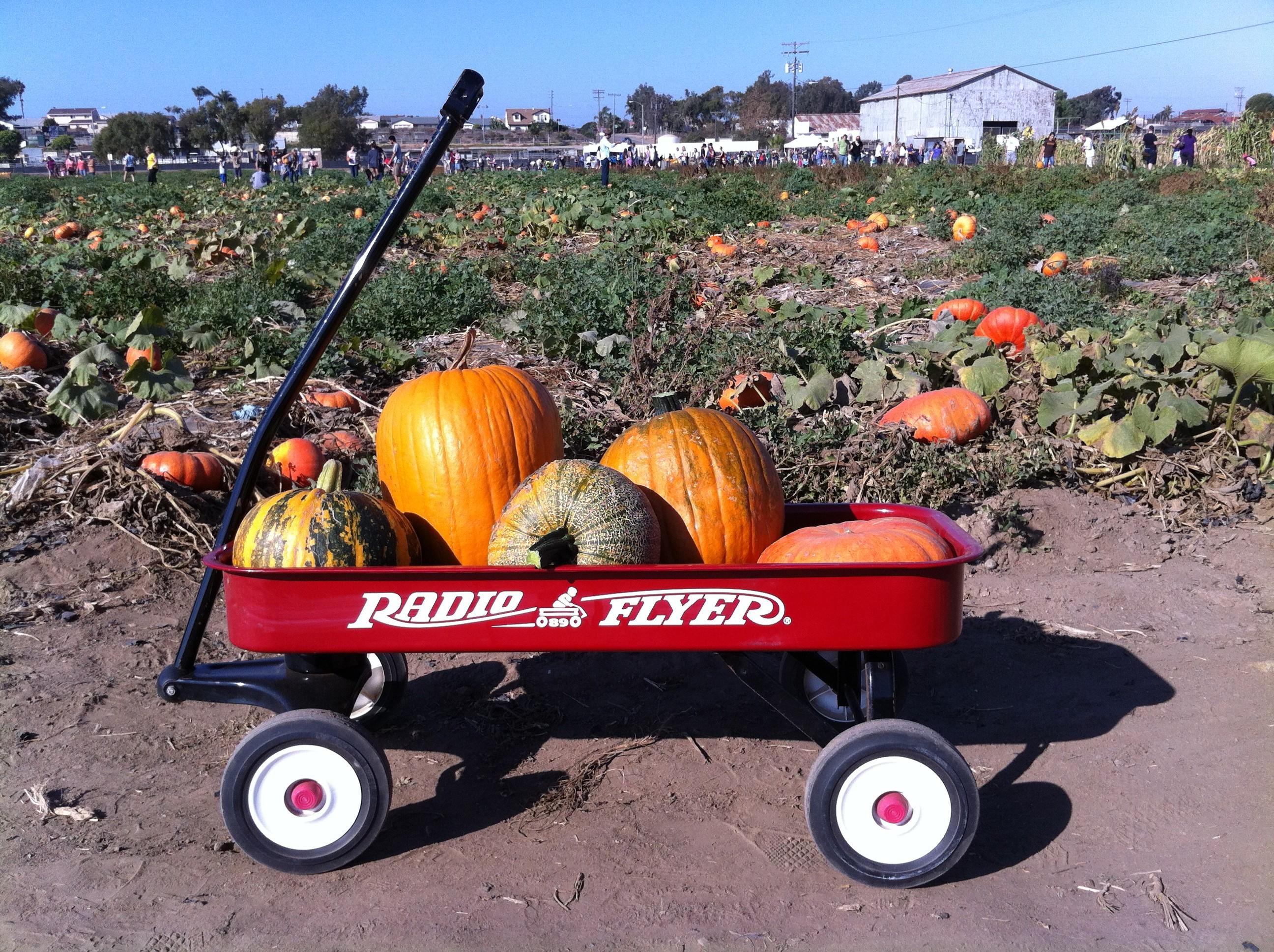 Pumpkins in a Radio Flyer at Suzie's Farm Pumpkin Palooza