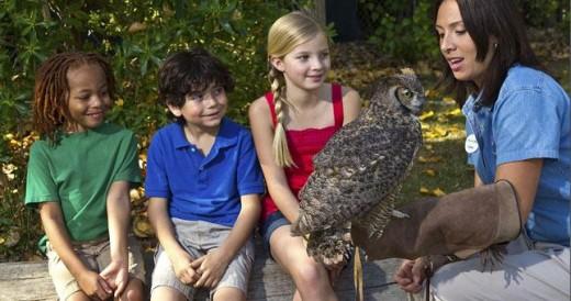 San Diego Zoo Play Days - Top Things in San Diego