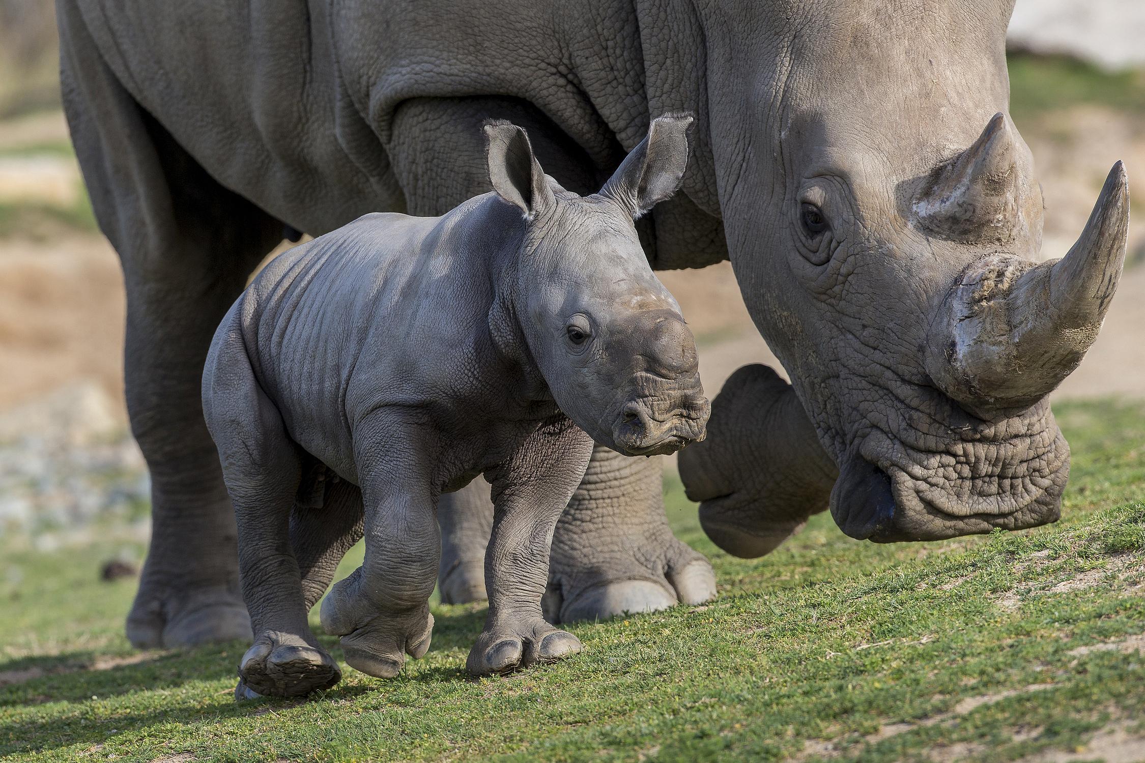 San Diego Zoo Safari Park Family Friendly Tips