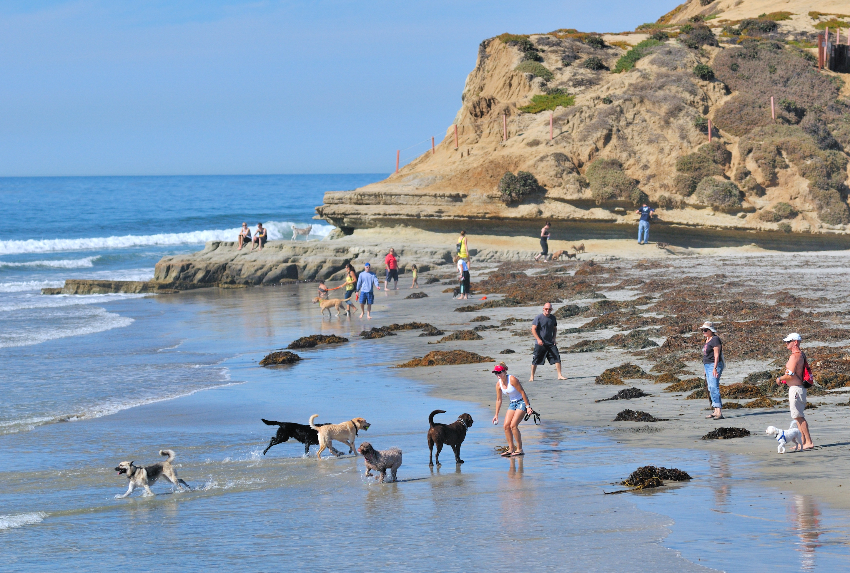 Dogs On Beach In Del Mar Courtesy James G