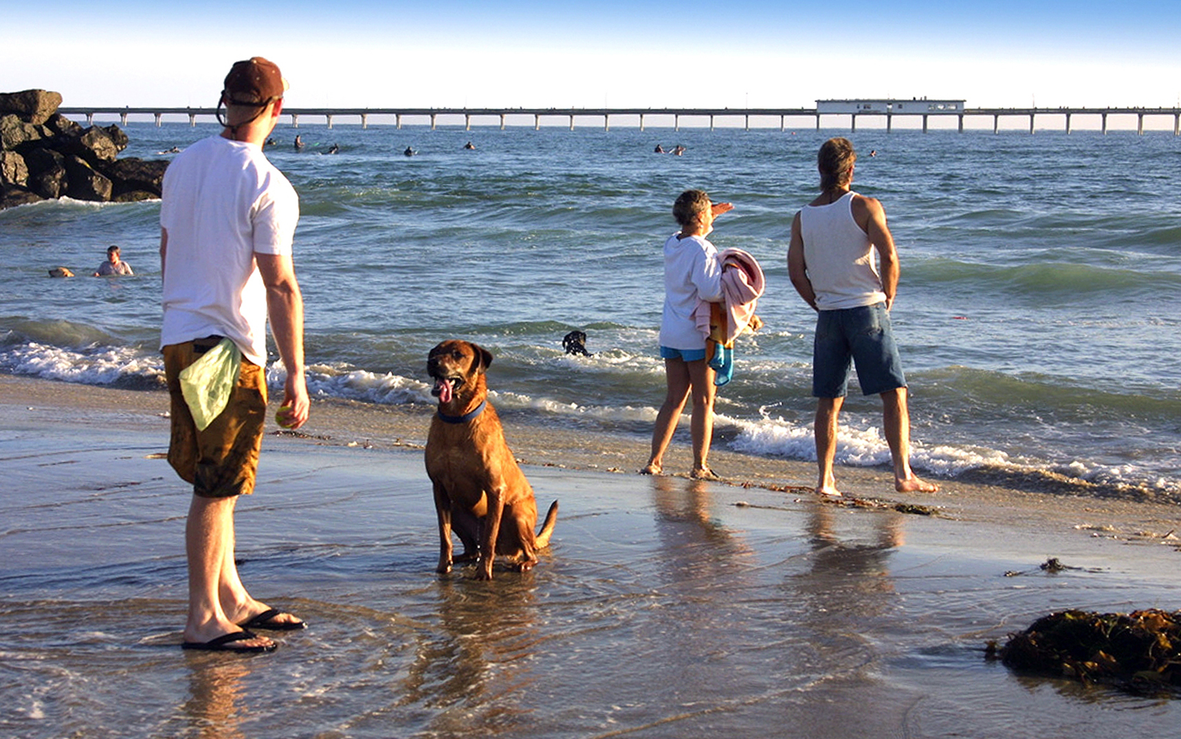 Soak Up The Sun With Your Pup At San Go S Dog Beaches