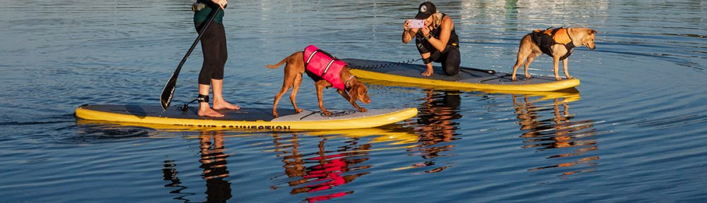 Standup Paddleboarders with their Dogs - San Diego is for Dog Lovers