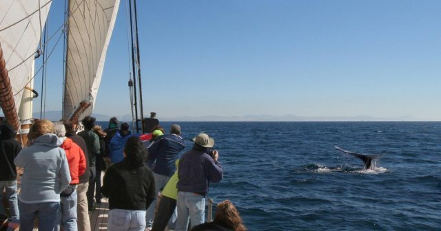 Whale Whatching - Top Things to Do in San Diego