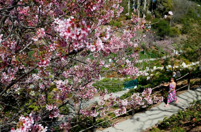 Japanese Friendship Garden - Top Things to Do in San Diego