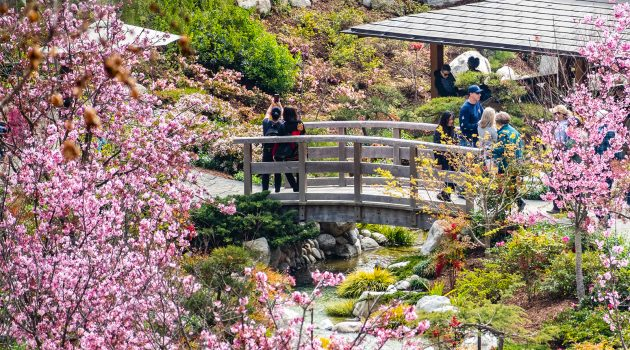Japanese Friendship Garden | Top Things to Do in San Diego