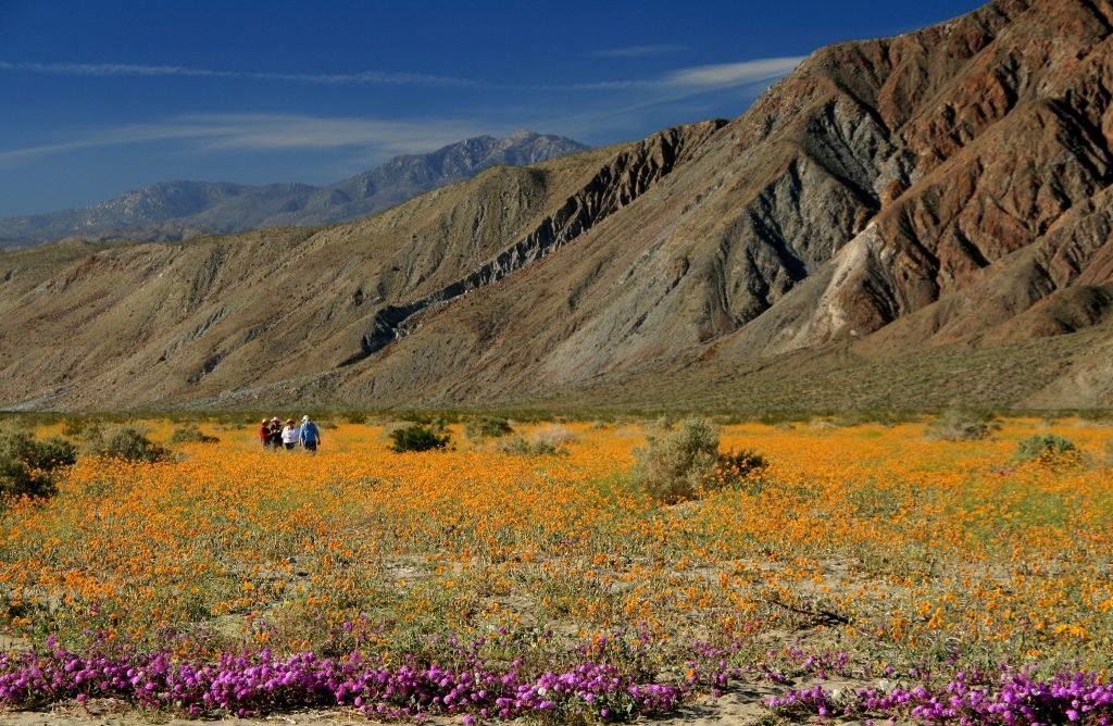 Did you know - Anza-Borrego Desert State Park in San Diego's East County is the largest state park in the continental United States.