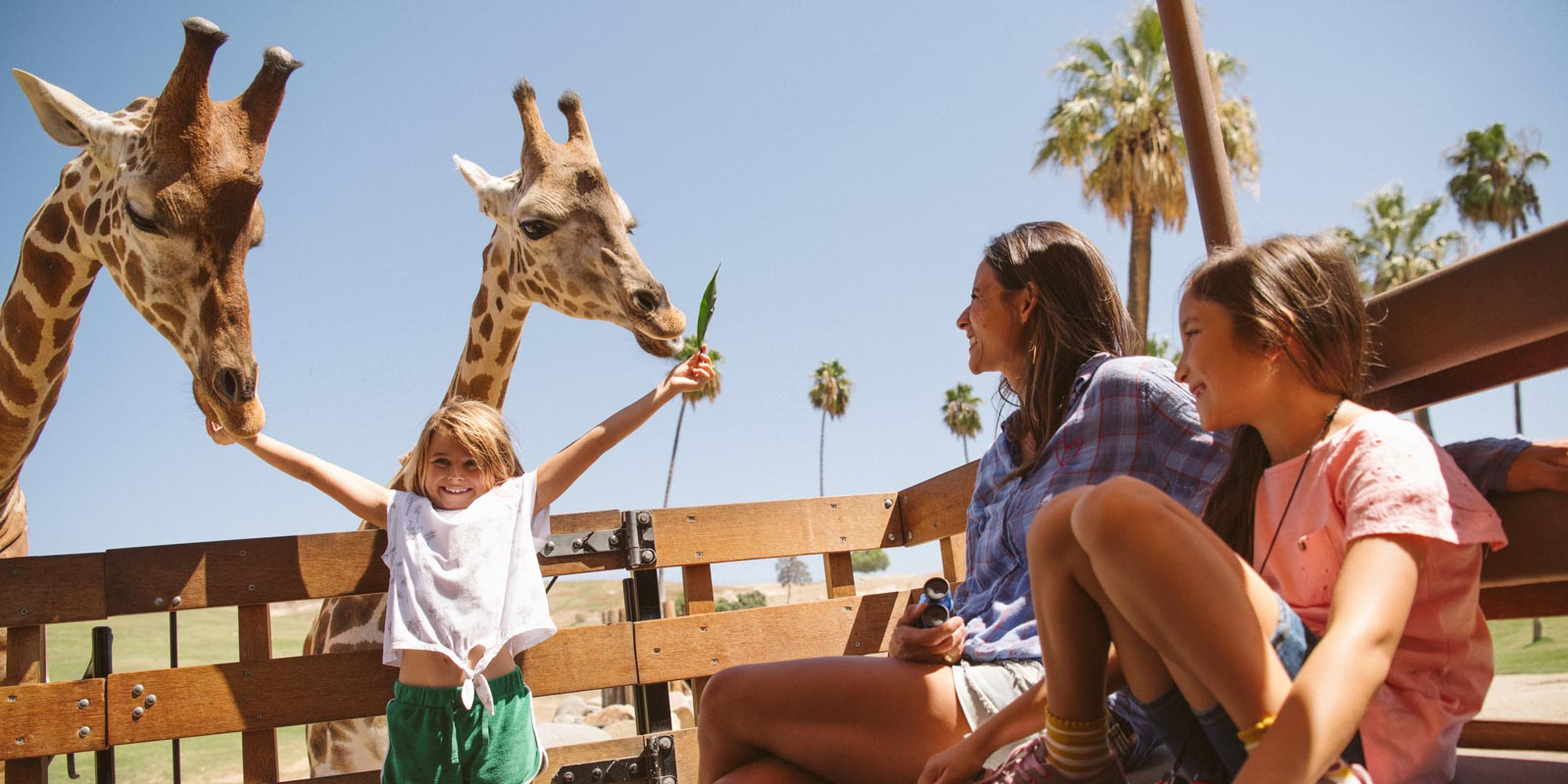Family feeds giraffes at San Diego Zoo Safari park as attractions reopen